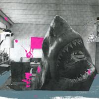 mario wagner_shark