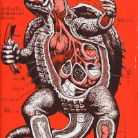 anatomy_gamera_