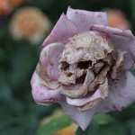 Photo of the day: skull flower