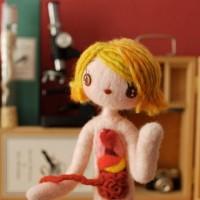Anatomical-Female-A