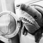 Photo of the Day: Shark Attack
