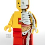 LEGO Anatomy Sculpture