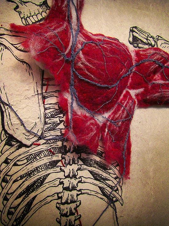 Anatomy 1