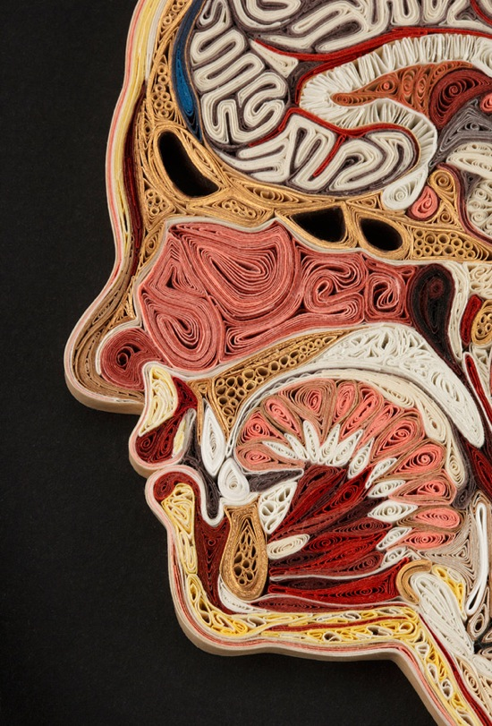 Anatomy 11