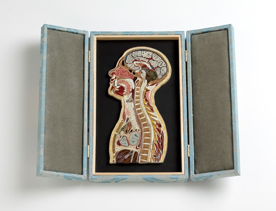 Anatomy 21