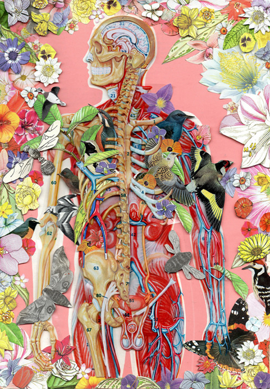 anatomical collage