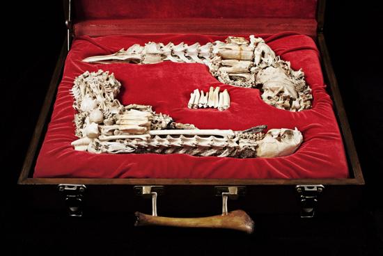 bone pistol set