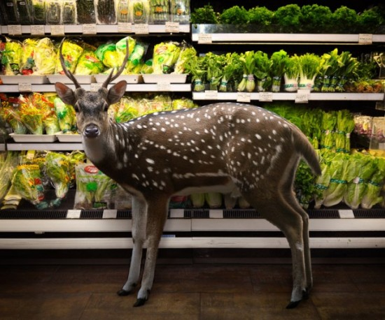 Wild-Animals-Inside-Supermarkets7