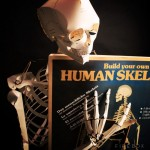 BUILD YOUR LIFE SIZE PAPER SKELETON