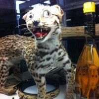 bad-taxidermy-10
