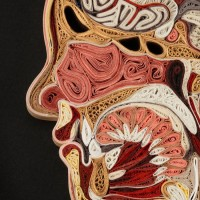 anatomy-11.jpg