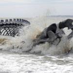 Serpent d'Océan – Huang Yong Ping