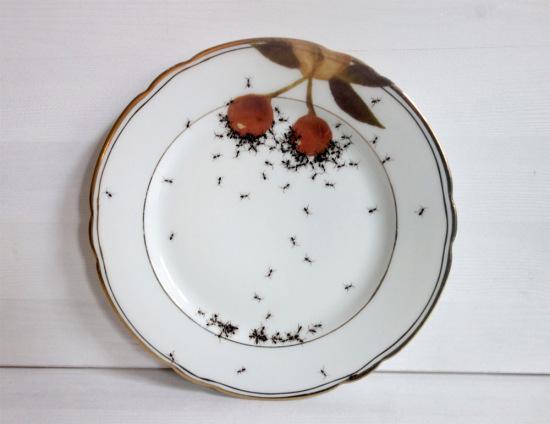 ants-1