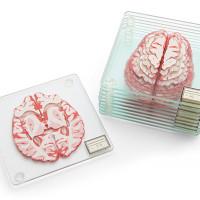 brains1